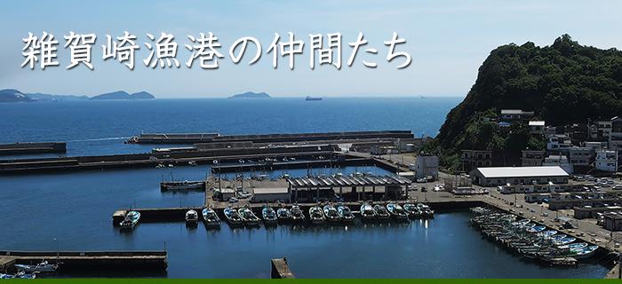 雑賀崎漁港の仲間たち